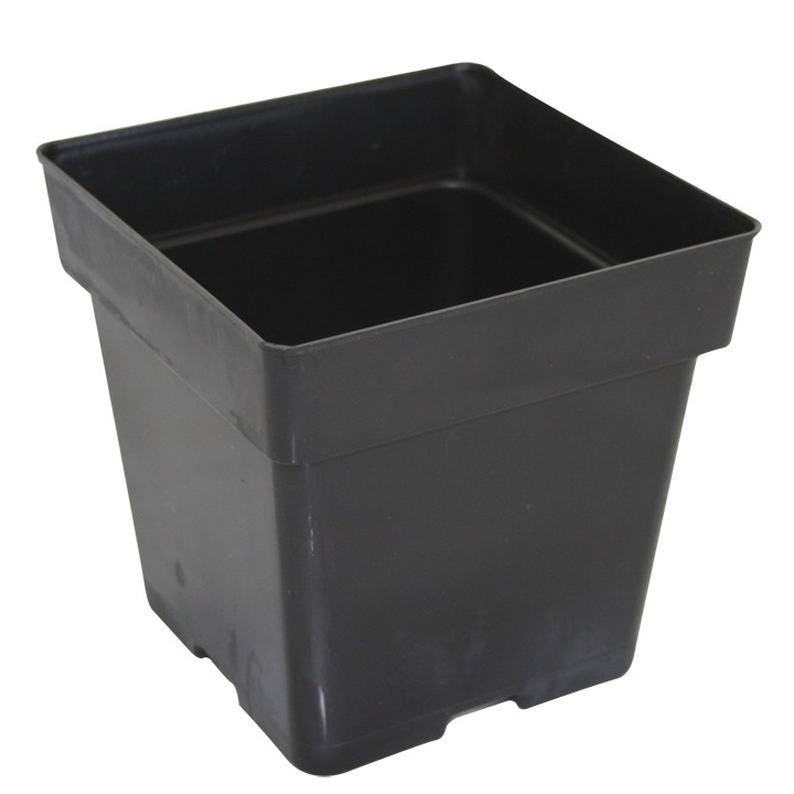 Square Pot 3.5 Inches